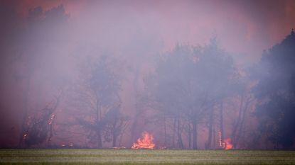 Brand in natuurgebied De Liereman onder controle: 167 hectare veengebied getroffen, vermoedens van brandstichting