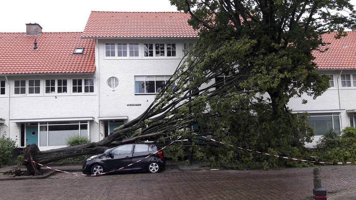 De omgevallen boom op de 1e Wilakkersstraat in het Witte Dorp in Eindhoven vernielde een auto, maar miste de huizen maar net.