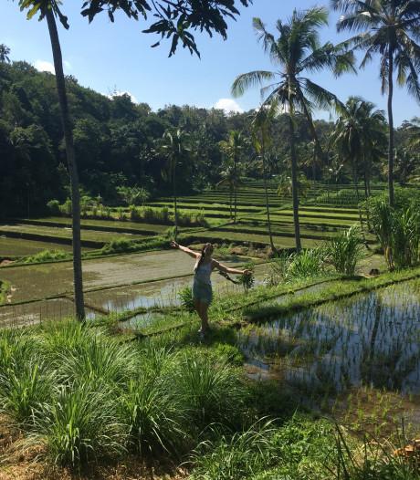 'Dankzij veredeling hebben de suikerriet- en rijstteelt overleefd'
