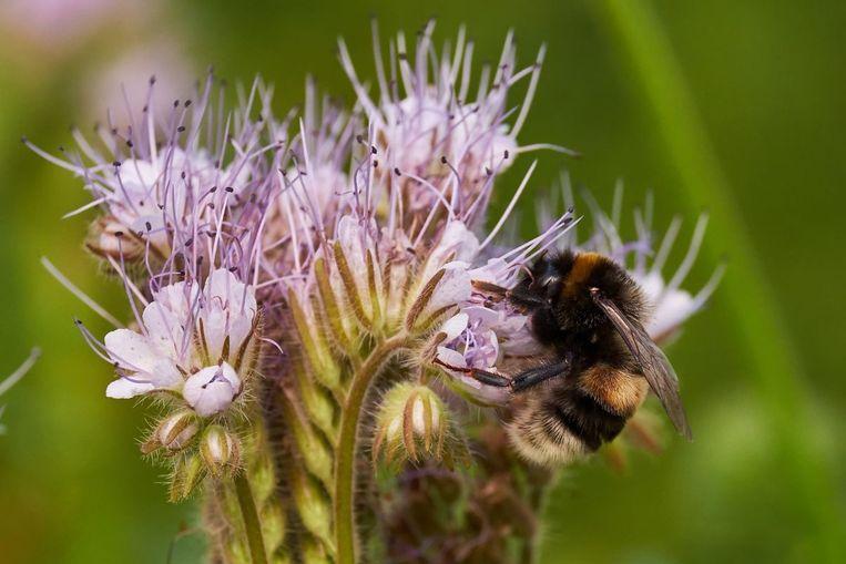De wondere wereld van de bijen. Een educatieve namiddag voor jong en oud.