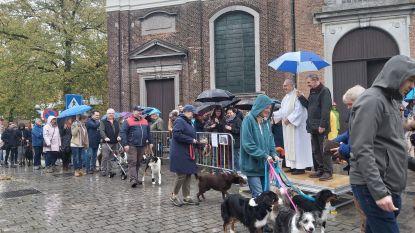 Pastoor zegent dieren tijdens Sint-Hubertusviering