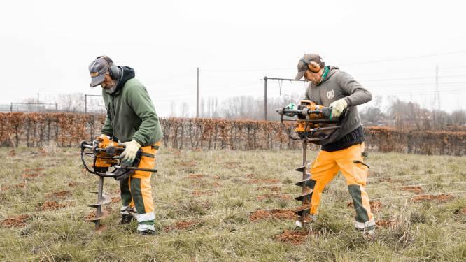 """Geboorteboomgaard krijgt 9.000 nieuwe bomen en bloemen: """"Paradijs voor insecten en vogels"""""""
