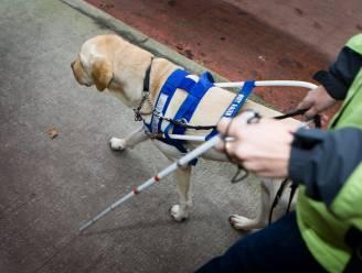 Draag jij ook je dopje bij? Londerzeel steunt project geleidehonden