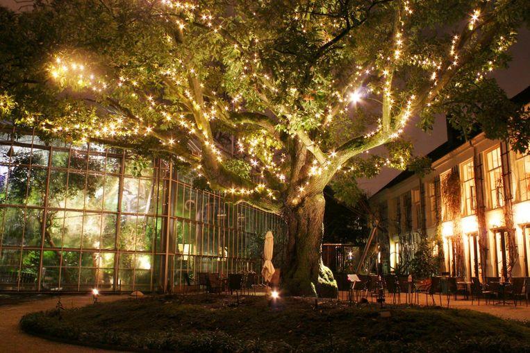 De Hortus Botanicus geeft licht Beeld Hortus Amsterdam, Barbara van Amelsfort