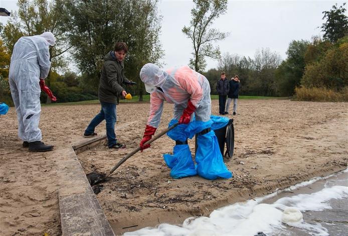 Dode kuifeenden worden geruimd op een strandje bij Monnickendam. Onderzoek door de Nederlandse Voedsel- en Warenautoriteit (NVWA) wees uit dat de dode watervogels zijn besmet met vogelgriep van het type H5N8.
