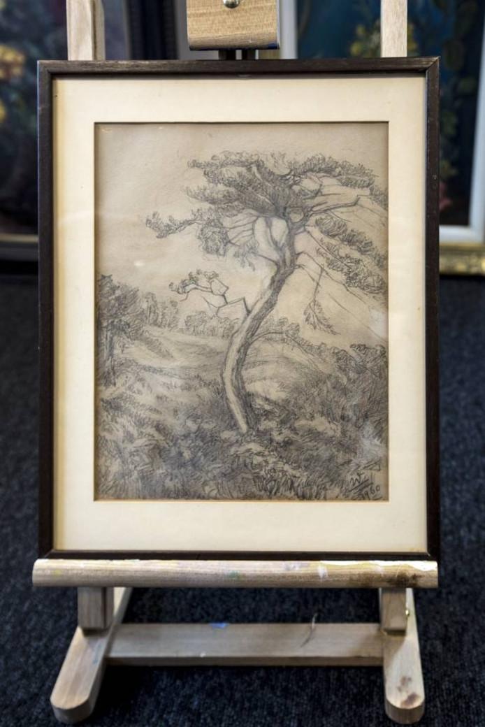 Potloodtekening van Denneboom in Wilhelminadal van Prinses Wilhelmina