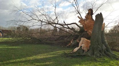 Storm blaast bomen, daken en zonnepanelen weg