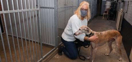 Bijna geen dieren meer in Zeeuwse asiels. 'Een hond is binnen een paar uur alweer weg'