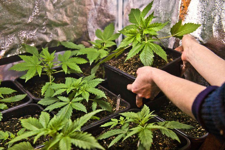 Danny (43) was betrokken bij een cannabisplantage. Zijn verhaal is er één van foute keuzes. Eerst in de liefde, dan in geldzaken, en toen de miserie compleet leek: de foute keuze die hij straks misschien bekoopt in de gevangenis.