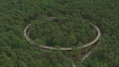 Vanaf nu kan je fietsen door de bomen in Limburg