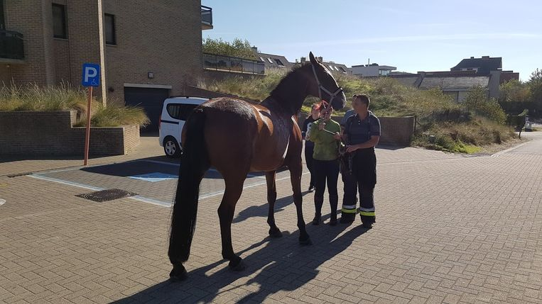 Het paard was wonderwel in goede gezondheid.