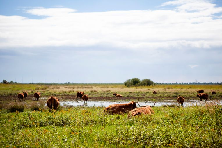 Op het eiland Tiengemeenten, in het Haringvliet, is de landbouwgrond omgevormd tot natuur. Beeld Hollandse Hoogte / Paulien van de Loo