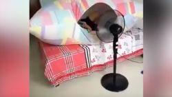 VIDEO. Genoeg van de hitte én muggen? Deze jongen heeft de perfecte oplossing