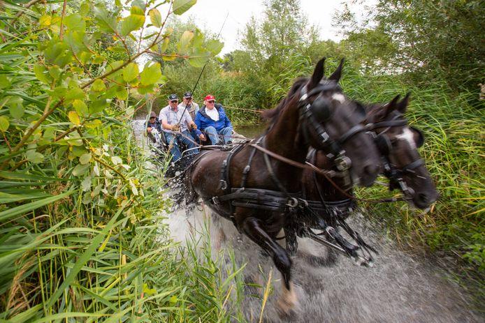 Het water spat op als een mencombinatie tijdens een eerdere editie van de Paarden4daagse door het het riviertje De Slinge komt.