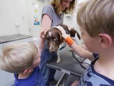 Trippende honden na eten mensenpoep vol drugs