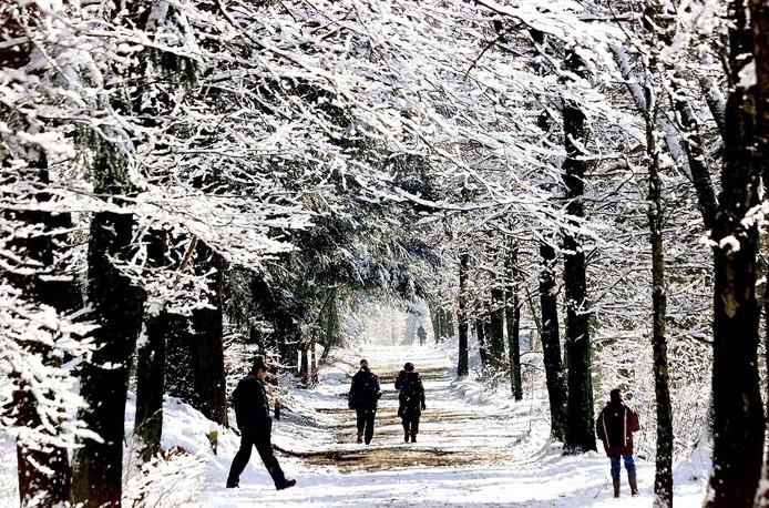 Sneeuwpret op de Veluwe.