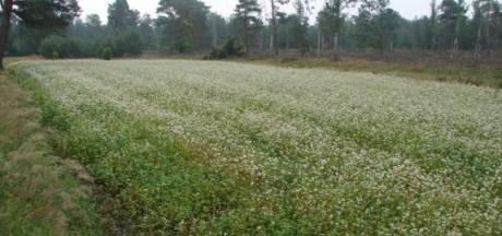 Heideakkertjes op Sallandse Heuvelrug voor biodiversiteit