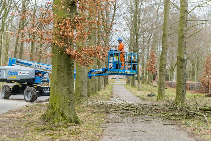 Ook in maart werden al bomen op de Koelaan gekapt.