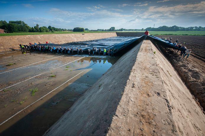Vijftig vrijwilligers leggen een zeil over een waterbassin bij het bedrijf Schneider Youngplants. Daarmee moet het bassin waterdicht worden gemaakt.