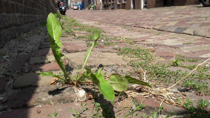 Onkruid wordt verwijderd, maar het is 'groeizaam weer' dus het duurt niet lang voor het weer terug groeit.