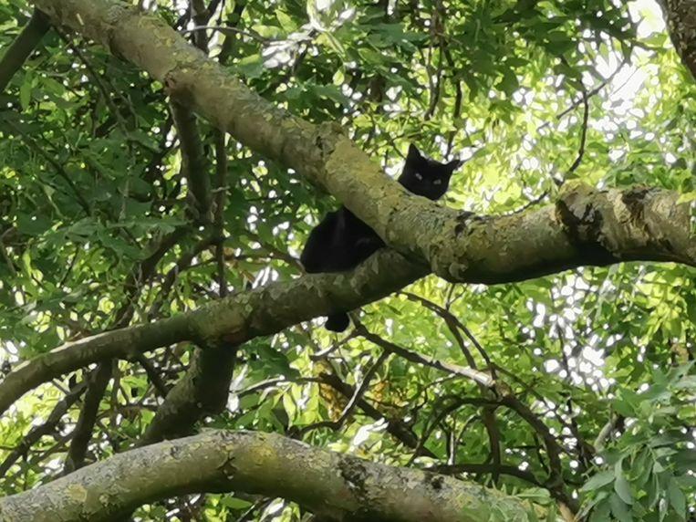 De kat houdt aan haar hachelijk avontuur een dubbele breuk in de achterpoot over.