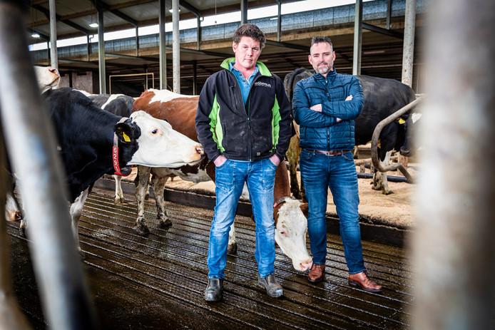 """Melkveehouders Arnold van Dorp(l) en Gerard van der Hulst (r) tussen de koeien op de nieuwe emissiearme stalvloer: ,,Alphen is bijna de grootste agrarische gemeente in Zuid-Holland. Doe eens iets voor boeren."""""""