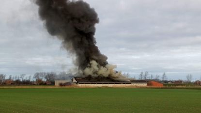 Verwoestende brand in varkensstal kost bijna 200 dieren het leven in Houtem