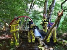Acht brandweerwagens naar klein brandje in droog bos Laag-Keppel