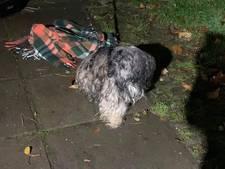 Hond zit in stromende regen vastgebonden aan hek van dierenopvang in Amersfoort