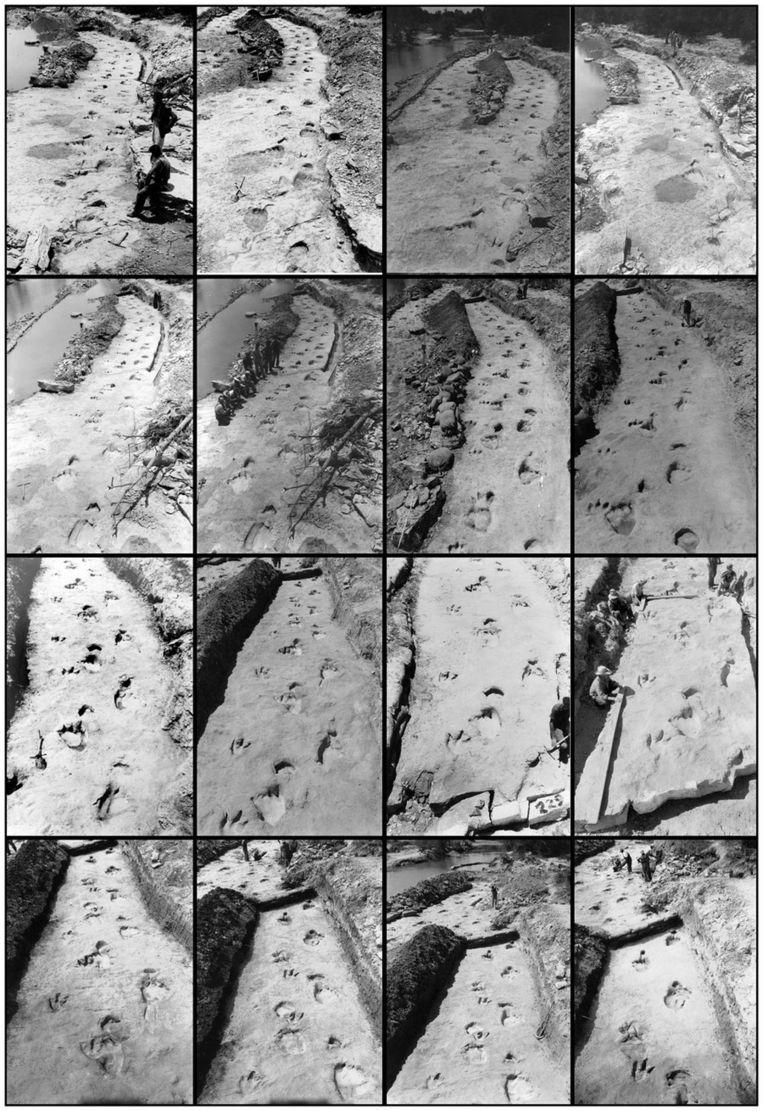 De foto's van het spoor van de dinosaurussen die in 1940 werden gemaakt. Beeld Plos One