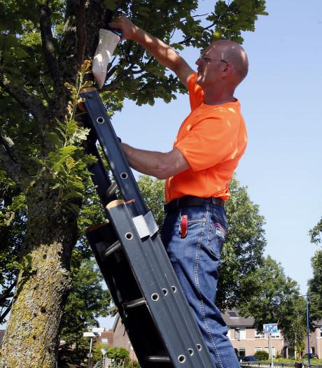 Meekijken over de schouders van de Gorcumse boomverzorgers