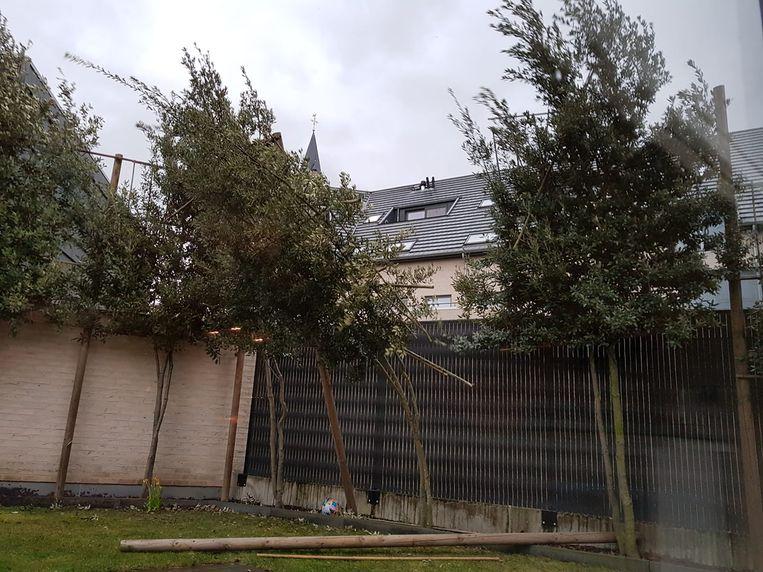 Op Vlierzeledorp sneuvelden zelfs enkele jonge boompjes in de tuin van een appartementsgebouw.
