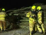 Bomen omgevallen in Spijk: te gevaarlijk om op te ruimen