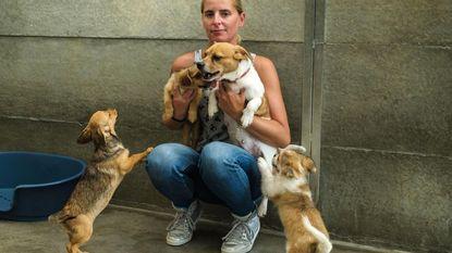 Chihuahuapup uit dierenasiel gestolen