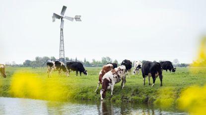 Kleine windmolens moeten energiefactuur van landbouwers doen dalen