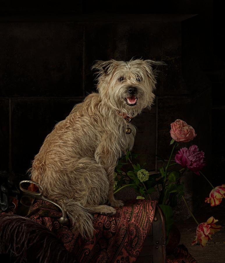 Fotograaf Julius Rooymans en modeontwerper Hans Ubbink maakten een minutieuze replica van De Nachtwacht. Een immense klus. Hond Saar van Pien Scheepers uit Heeze figureerde in het schilderij en werd speciaal voor het kunstje getraind. ,,Die hond hadden we in één keer.''