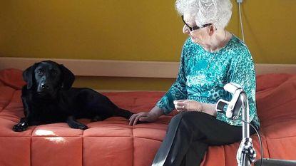 Nieuwe vrijwilliger rusthuis De Noordhinder is...labrador