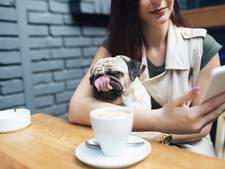 Hondenliefhebbers opgelet: het eerste hondencafé komt eraan