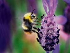 Hardinxveld onthult 'prachtlint' van streekeigen bloemen en bomen
