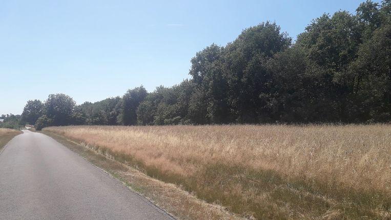 Een gebied met oppervlakte van twee en halve hectare aan Bergen in Herenthout wordt erkend als privaat natuurgebied.