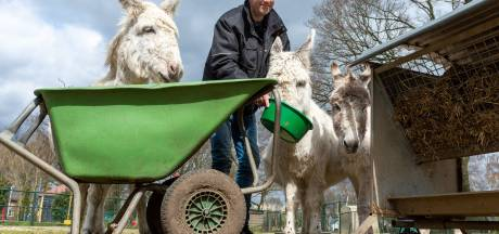 Kinderboerderij in Epe roept om brood en groente: 'Vallen tussen wal en schip'