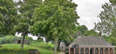 Steun voor actie behoud kastanjebomen in Hellevoetsluis