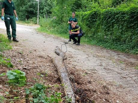 Gigantische wurgslang van bijna 6 meter gevonden langs spoor in Oosterbeek