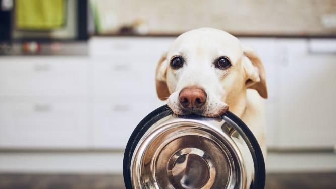 Viervoeter in huis? 5 feiten en fabels over hondenbrokken op een rijtje