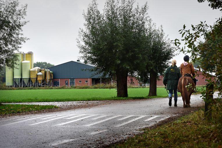 Intensieve veehouderij in de Brabantse Peel. Beeld Marcel van den Bergh
