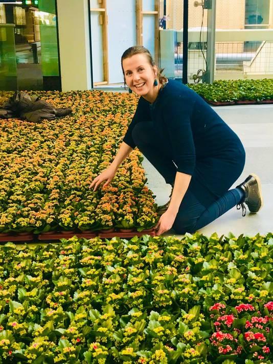 Adriënne Rombout aan het werk met de vetplantjes.