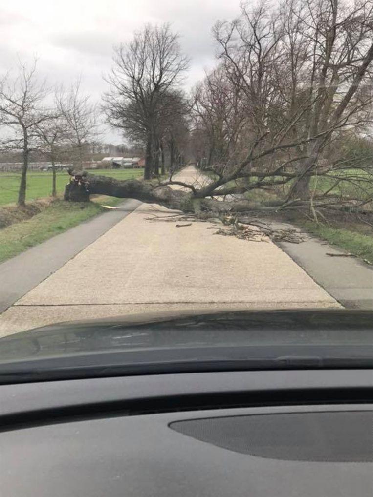Aan de Koloniedijk sneuvelde ook een boom.
