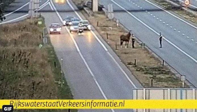 De politie haalt een paard van de middenberm van de A325 bij Ressen.
