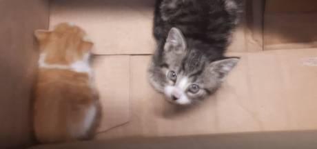 Kittens steeds vaker gedumpt: 'Blijkbaar een trend om beestjes bij het vuil te zetten'