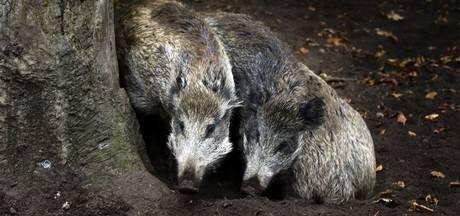 PvdD kritisch over afschieten 58 dieren in Apeldoorn